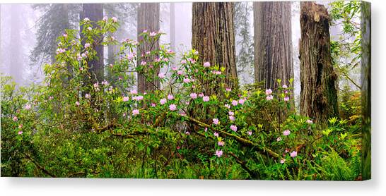 Redwood Forest Canvas Print - Rhododendron Flowers In A Forest, Del by Panoramic Images