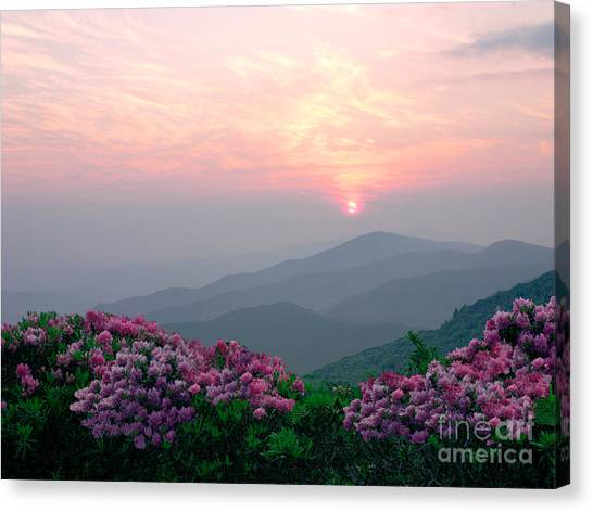 Rhododendron Sunrise Canvas Print