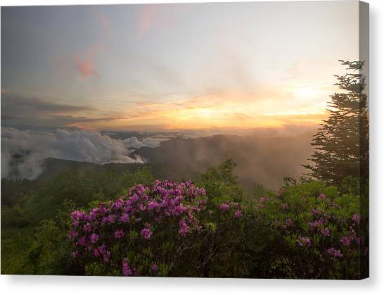 Rhododendron Sunset Canvas Print