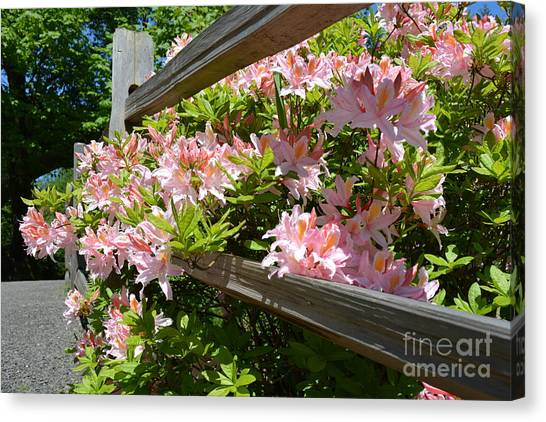 Rhododendrons In Tumwater Falls Park Canvas Print