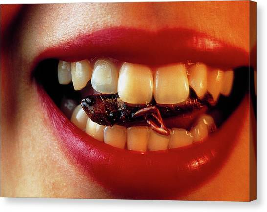 Grasshoppers Canvas Print - Rice Field Grasshopper Between Woman's Teeth by Peter Menzel/science Photo Library