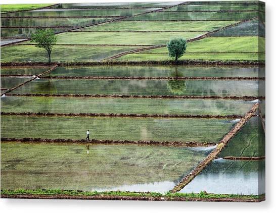 Walk Canvas Print - Rice Field On Man by ??irin Akt??rk