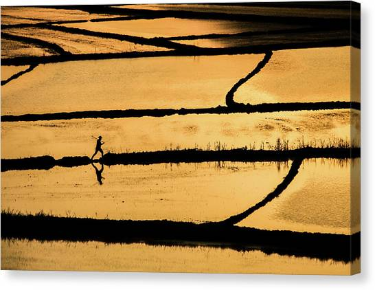 Rice Canvas Print by ?mm? Nisan