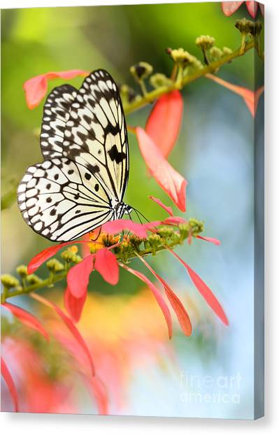 Rice Paper Butterfly In The Garden Canvas Print