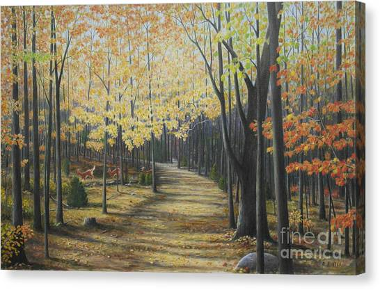 Rideau Walking Trail Canvas Print