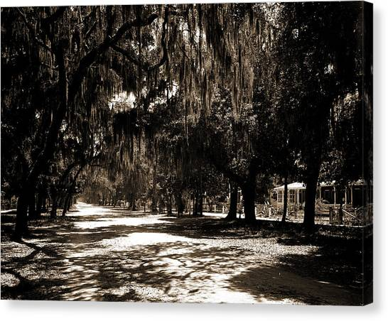 Ridgewood Canvas Print - Ridgewood Ave, Daytona, Fla, Roads, Spanish Moss by Litz Collection