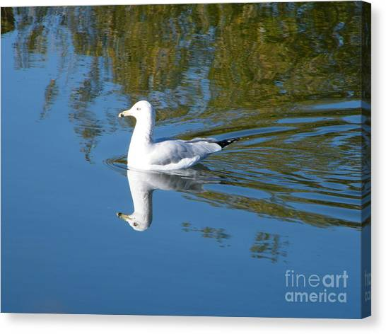 Canvas Print featuring the photograph Ring-billed Gull by Ann E Robson