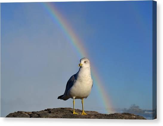 Ring Billed Seagull At Niagara Falls Canvas Print