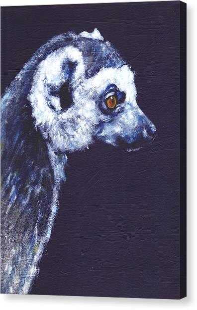 Ring-tailed Lemur Canvas Print - Ring Tailed Lemur by Clare Sherwen