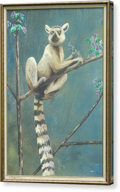Ring-tailed Lemur Canvas Print - Ring Tailed Lemur by Marty Guy