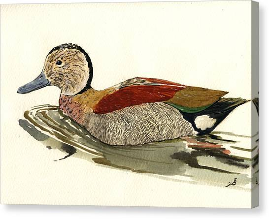 Ducks Canvas Print - Ringed Teal by Juan  Bosco