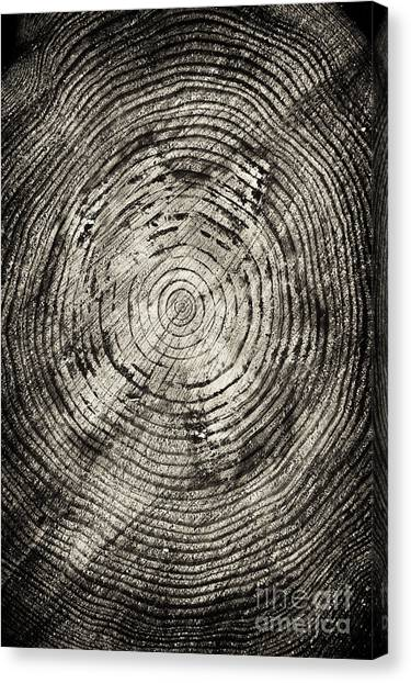 Tree Trunks Canvas Print - Rings Of Time  by Tim Gainey