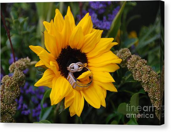 Rings On A Sunflower Canvas Print