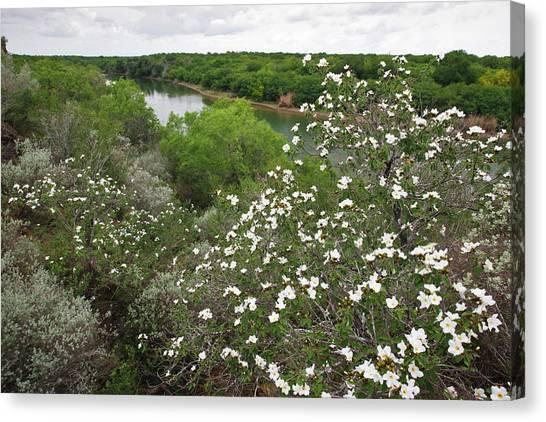 Rio Grande River Canvas Print - Rio Grande, South Texas by Larry Ditto