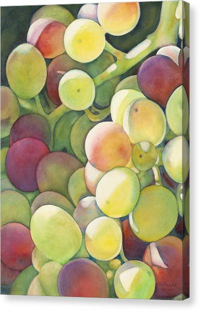 Grape Vine Canvas Print - Ripening by Sandy Haight