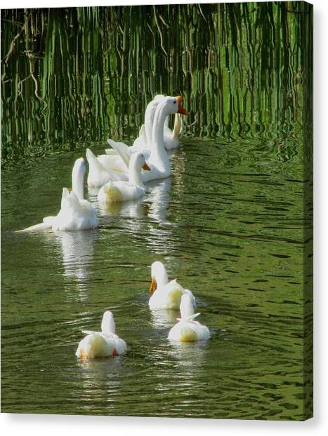 Ripples On The Pond Canvas Print by Carol Hoffman