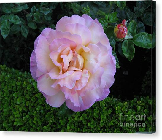 Ritzy Pink Rose Canvas Print