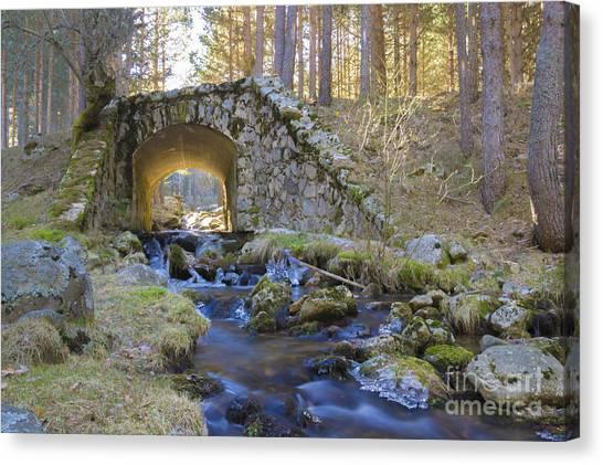 River And Bridge Canvas Print