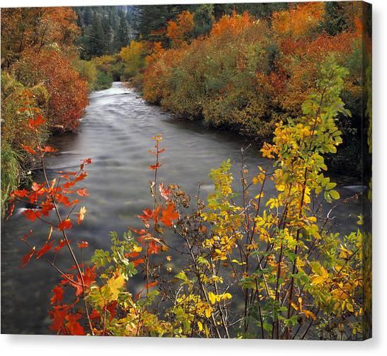 River Color Canvas Print by Leland D Howard