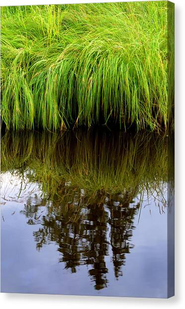 Riverbank Wild Grass Canvas Print