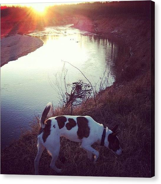 Hunting Canvas Print - Riverside Pup by Payden Rodman