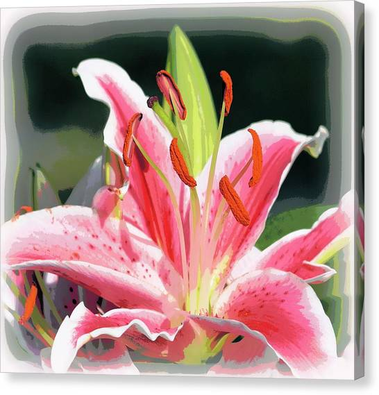 Rk Pink Tiger Lily 2 Canvas Print by Sheri McLeroy