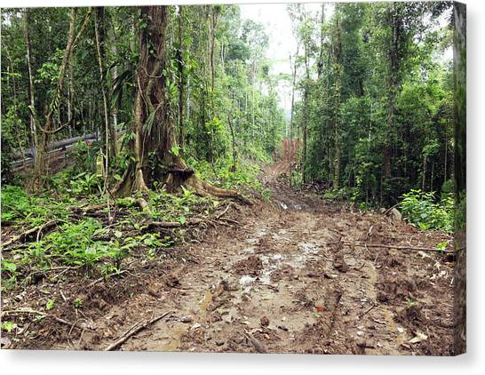 Deforestation Canvas Print - Road Construction In The Amazon by Dr Morley Read