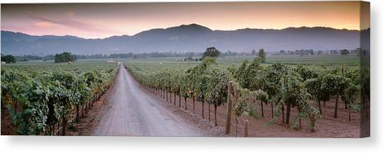 Vineyard In Napa Canvas Print - Road In A Vineyard, Napa Valley by Panoramic Images
