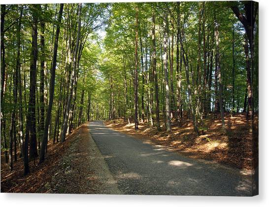 Road In Forest  Canvas Print by Ioan Panaite