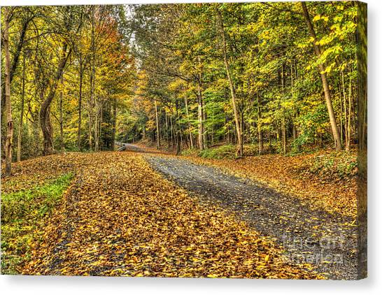 Road Into Woods Canvas Print