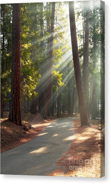 Redwood Forest Canvas Print - Road Through Mariposa Grove by Jane Rix