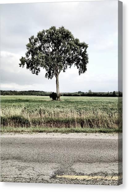 Trout Canvas Print - Roadside Solo by Kreddible Trout