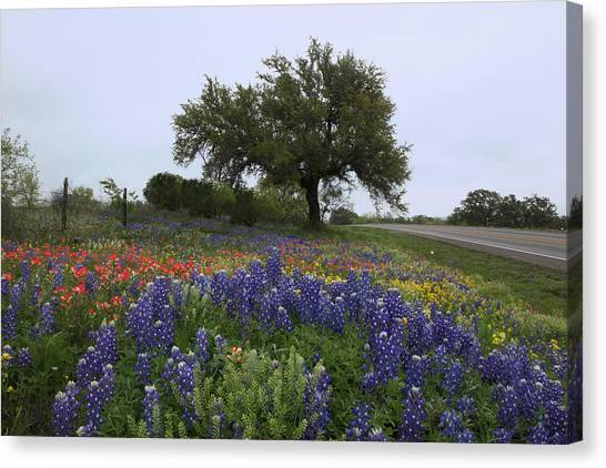 Roadside Splendor Canvas Print