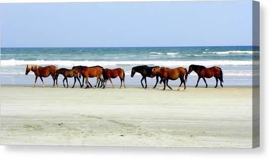 Close Up Horses Canvas Print - Roaming Wild And Free by Kim Galluzzo Wozniak