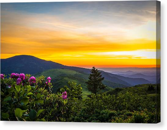 Roan Mountain Sunset Canvas Print