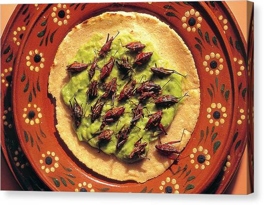 Grasshoppers Canvas Print - Roasted Grasshoppers And Avocado On Tortilla by Peter Menzel/science Photo Library