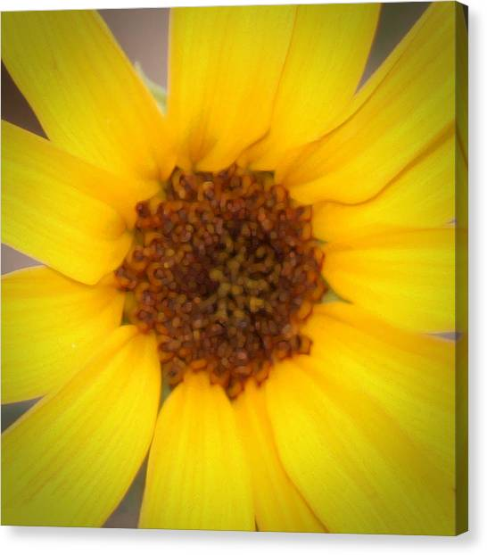 Robert Melvin - Fine Art Photography - Into The Middle Canvas Print
