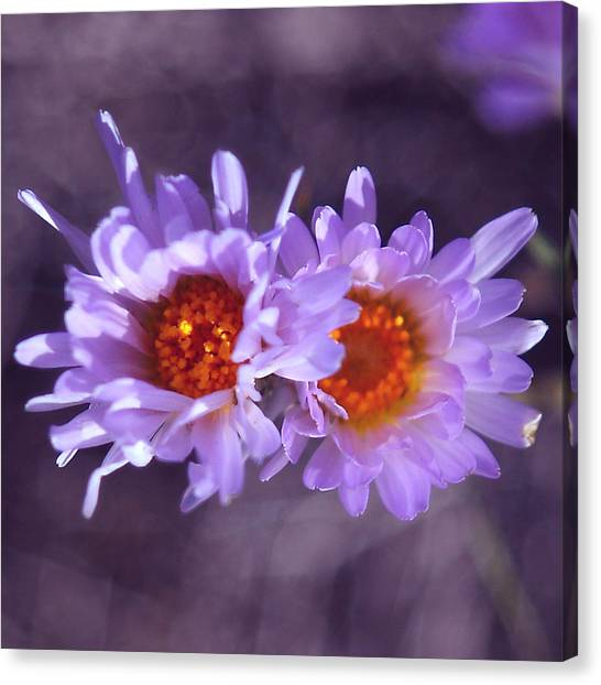 Robert Melvin - Fine Art Photography - Purple Morning Canvas Print