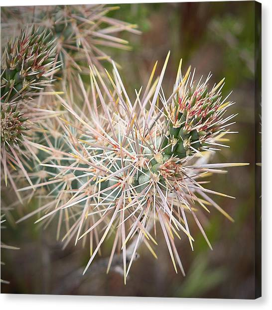 Robert Melvin - Fine Art Photography - Thorny Issue Canvas Print