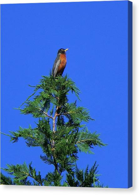 Robin Christmas Tree Topper Canvas Print