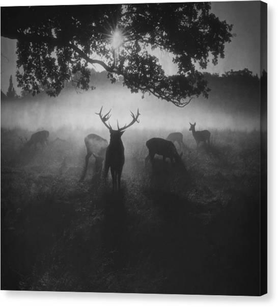 Robin Hood Woods Canvas Print by Robert Fabrowski