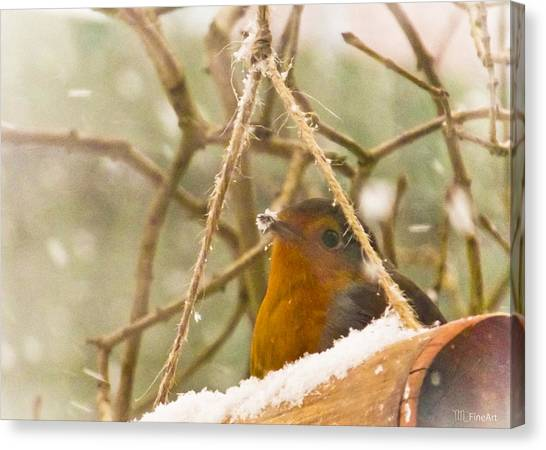 Robin In Winter Canvas Print
