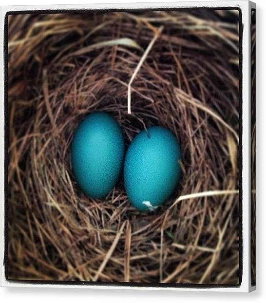 Robins Canvas Print - Robins Egg Blue, The Color Of Spring by Heidi Hermes