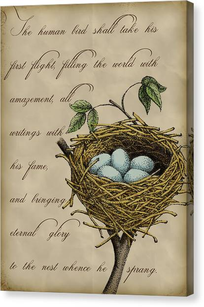 Robin Canvas Print - Robin's Nest by Christy Beckwith