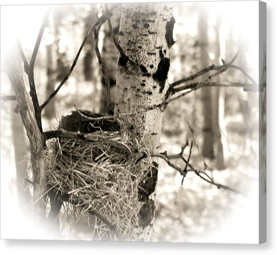 Canvas Print featuring the photograph Robins Nest In The Aspens by William Havle