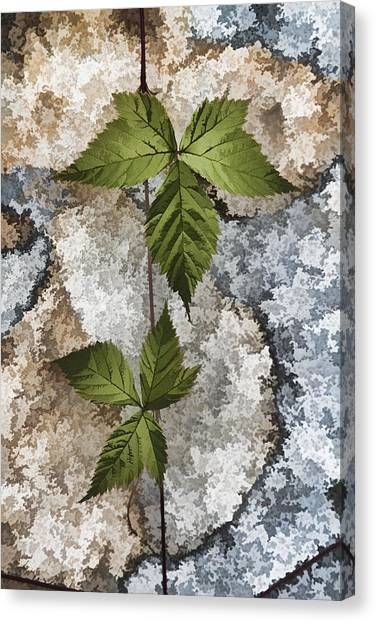 Rock And Vine Canvas Print