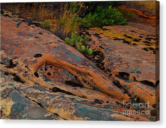 Rock Garden Canvas Print