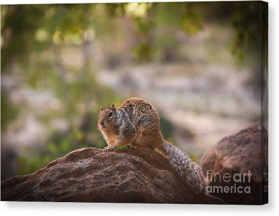 Bushy Tail Canvas Print - Rock Squirrel In Zion by Robert Bales