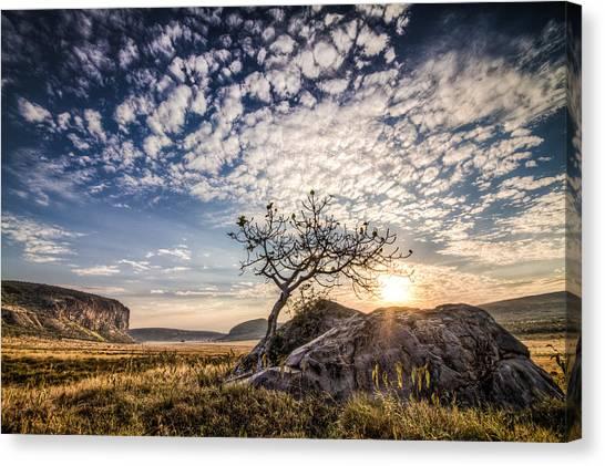 Rock Tree And Rising Sun Canvas Print