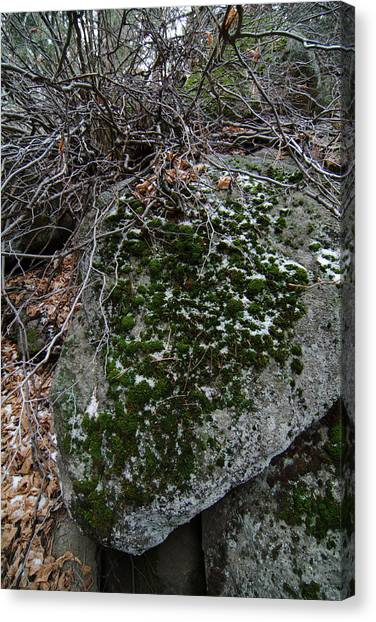 Rock With Lichen And Snow Canvas Print